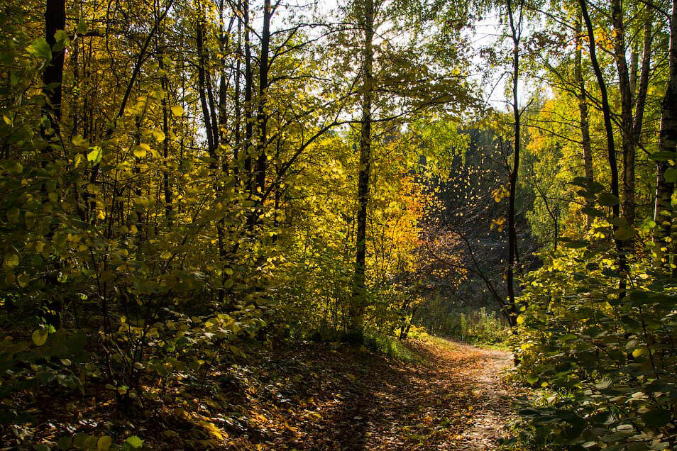 Осенний лес, бабье лето, фото,  пейзаж