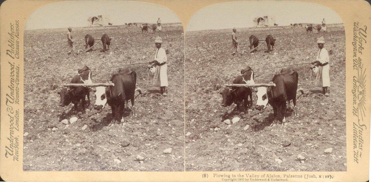 Пахота в долине Аялон. 1900