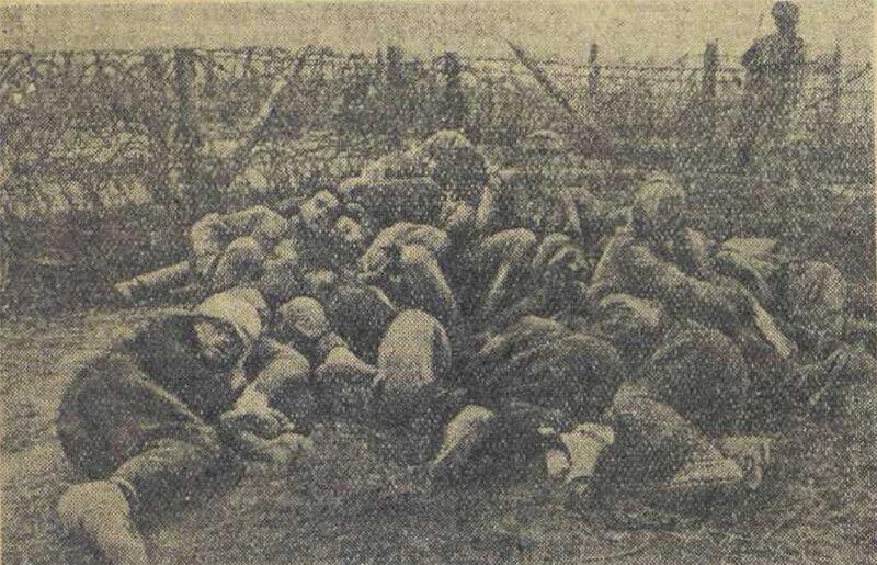 «Красная звезда», 1 августа 1942 года, что творили гитлеровцы с русскими прежде чем расстрелять, что творили гитлеровцы с русскими женщинами, зверства фашистов, зверства фашистов над женщинами, зверства фашистов над детьми, издевательства фашистов, преступления фашистов