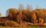 Золотые краски осени. 002..jpg