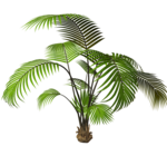 R11 - Garden Plant 2014 - 124.png