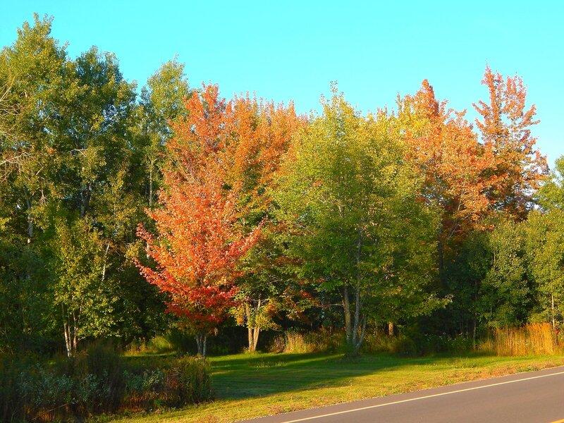 Вот и осень...