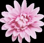 bee_floral_el7.png