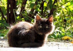 Котёнок по имени ГАВ (Ночка)