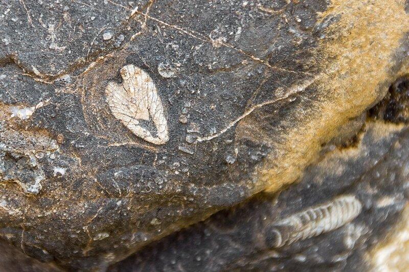 Обитатели доисторического океана