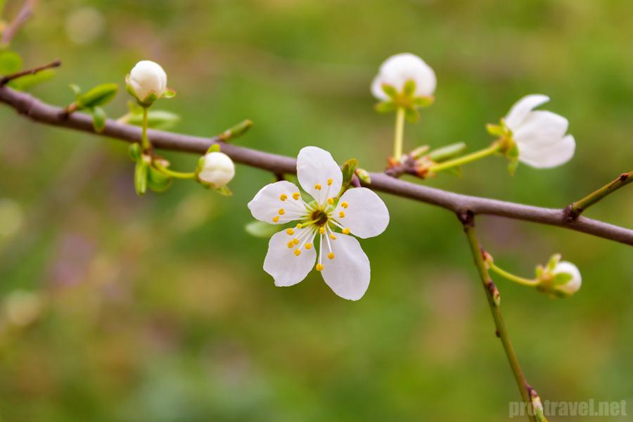 Начало весны в Крыму