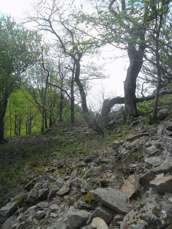Камни на склоне ... SAM_6733.JPG