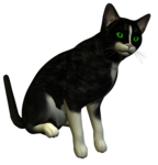 R11 - Black Cat 2014 - 001.png