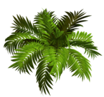 R11 - Garden Plant 2014 - 122.png
