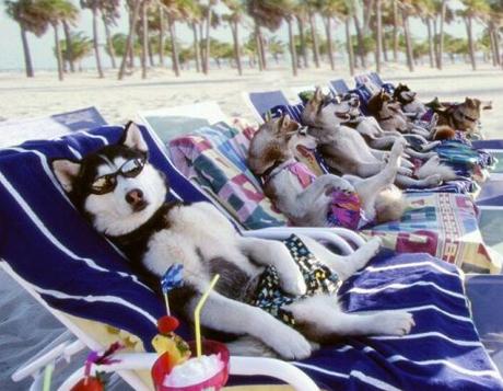 Отдых с животными - советы и подсказки
