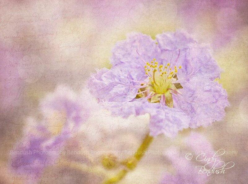 Wearing Purple.jpg