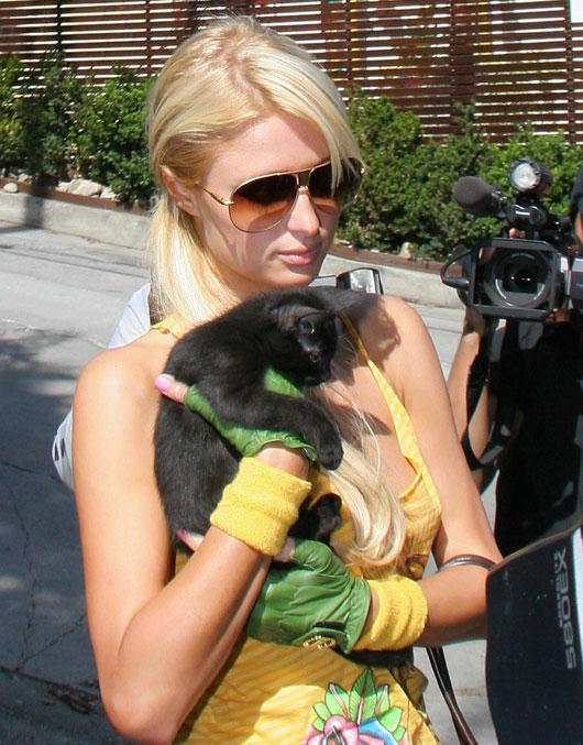 Пэрис Хилтон и кошка фото