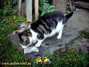 Кошка Катька