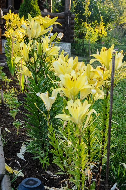 20140719_210256_цветы.jpg