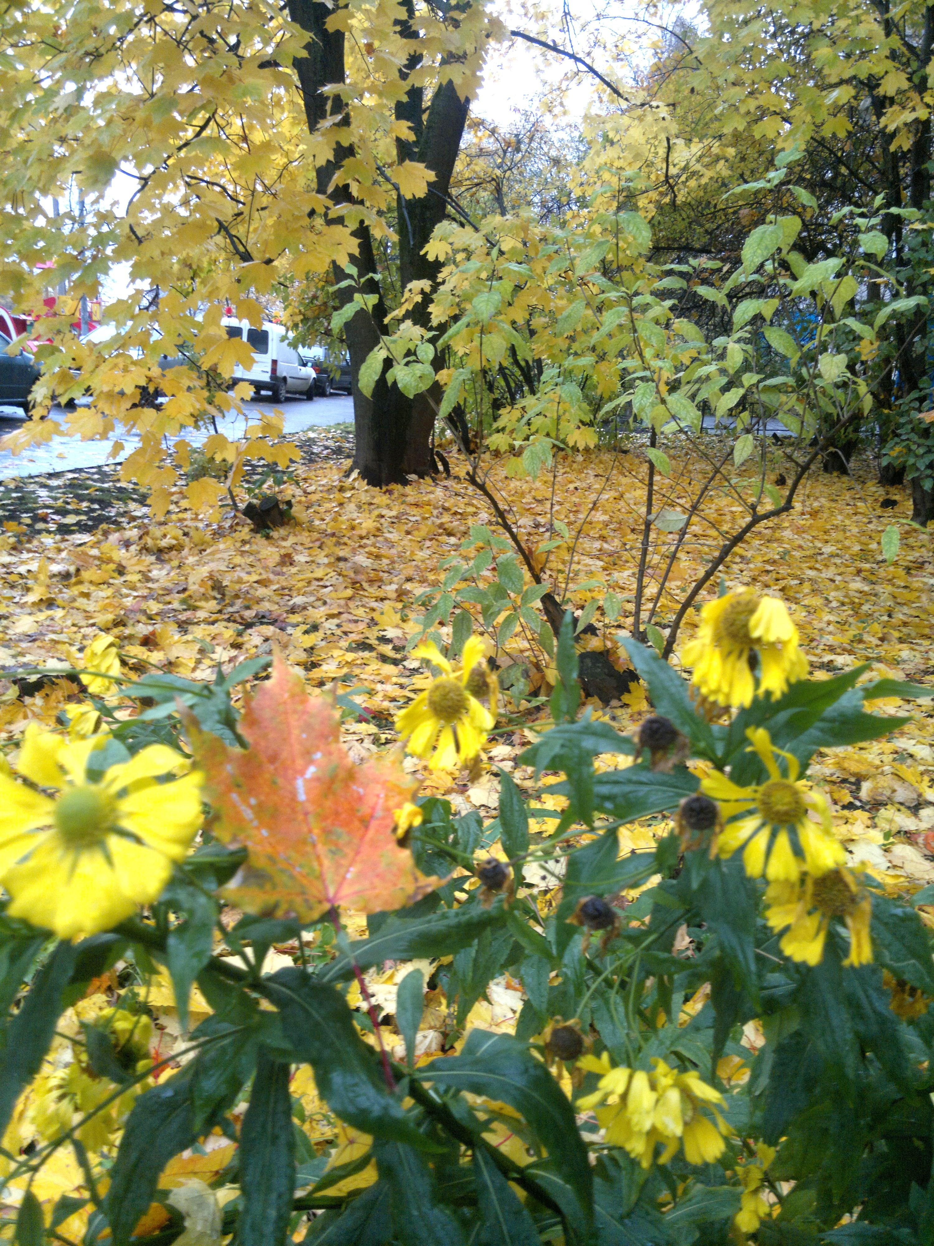 2014-10-14-2430.jpg