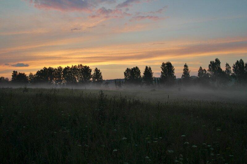Простые красоты сибирского леса.