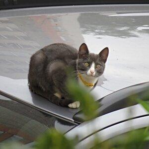 Котик на крыше машины