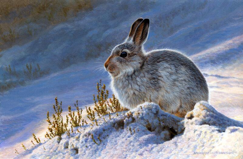 Воскресение, картинки для детей заяц зимой в лесу