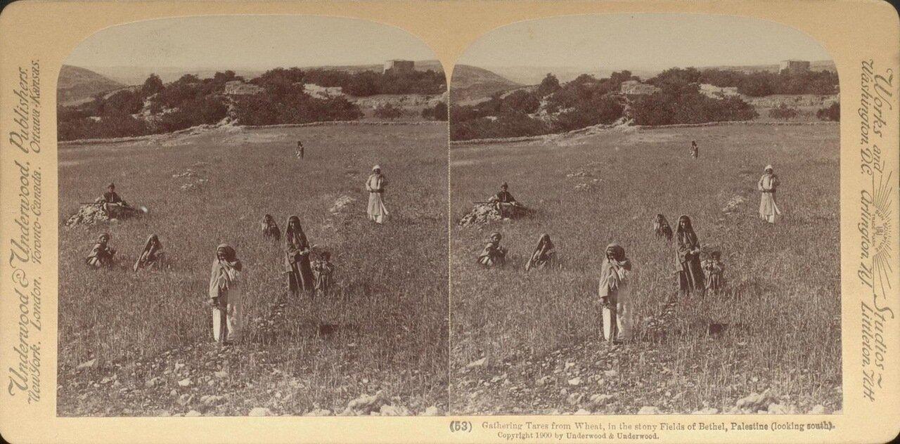 Вефиль. Пропалывание сорняков. 1900