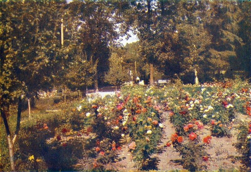 Площадка  роз.jpg