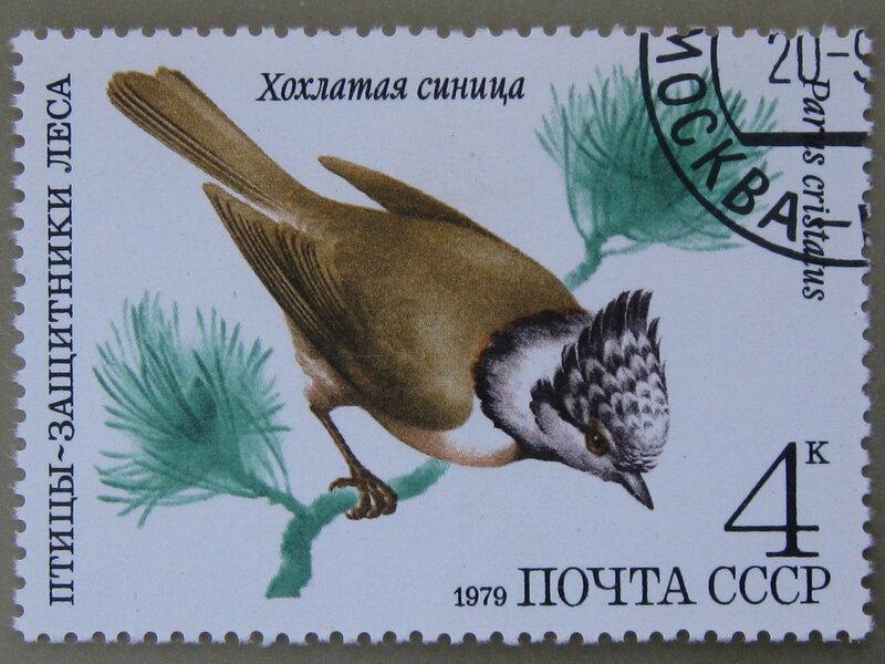 Хохлатая синица (Parus cristatus).