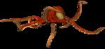 осьминог (1).png