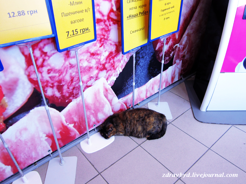 кот спит в магазине