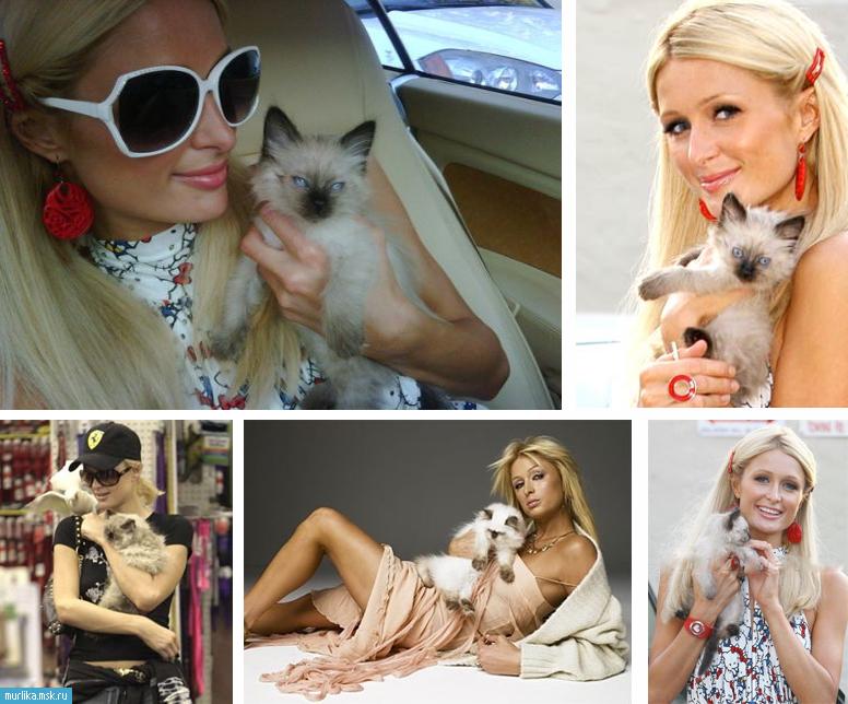 Пэрис Хилтон с кошкой фото