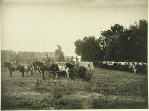 Конный санитарный транспорт отряда № 15 во время стоянки