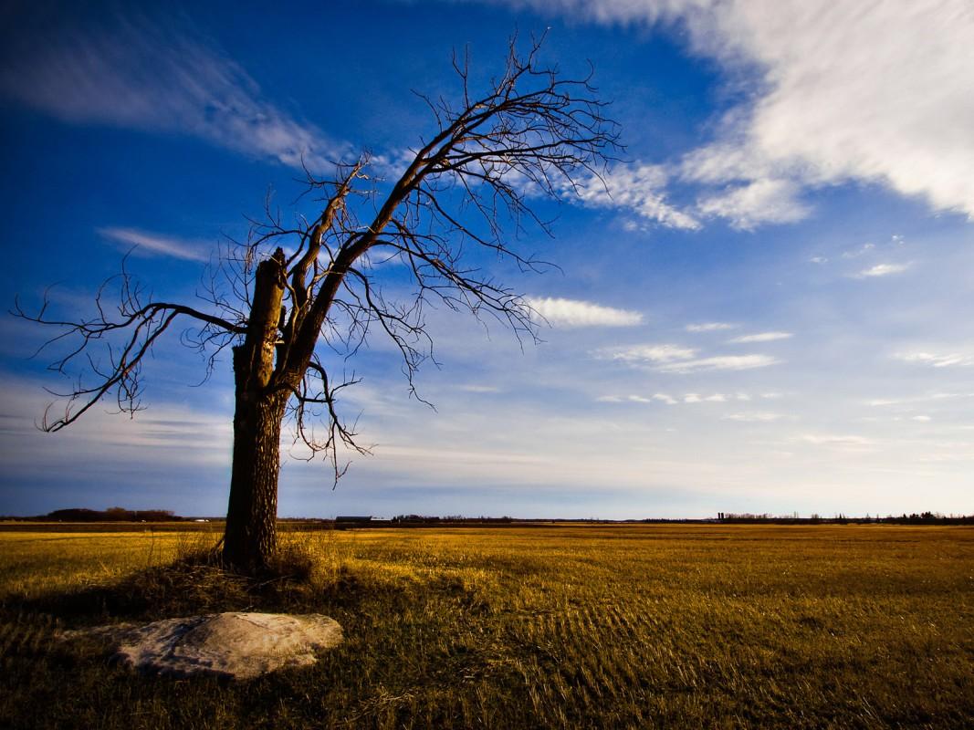 одинокое сухое дерево