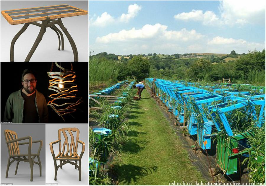Как выращивают стулья, столы и абажуры