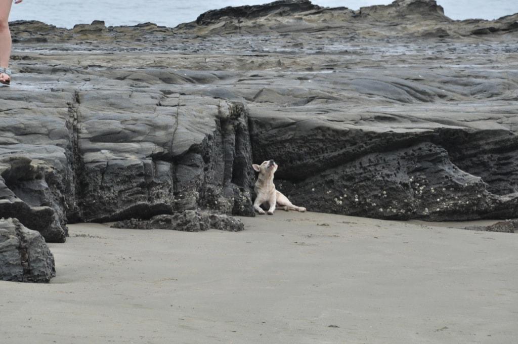 В Гоа все пляжи хороши, главное - тенек найти :)