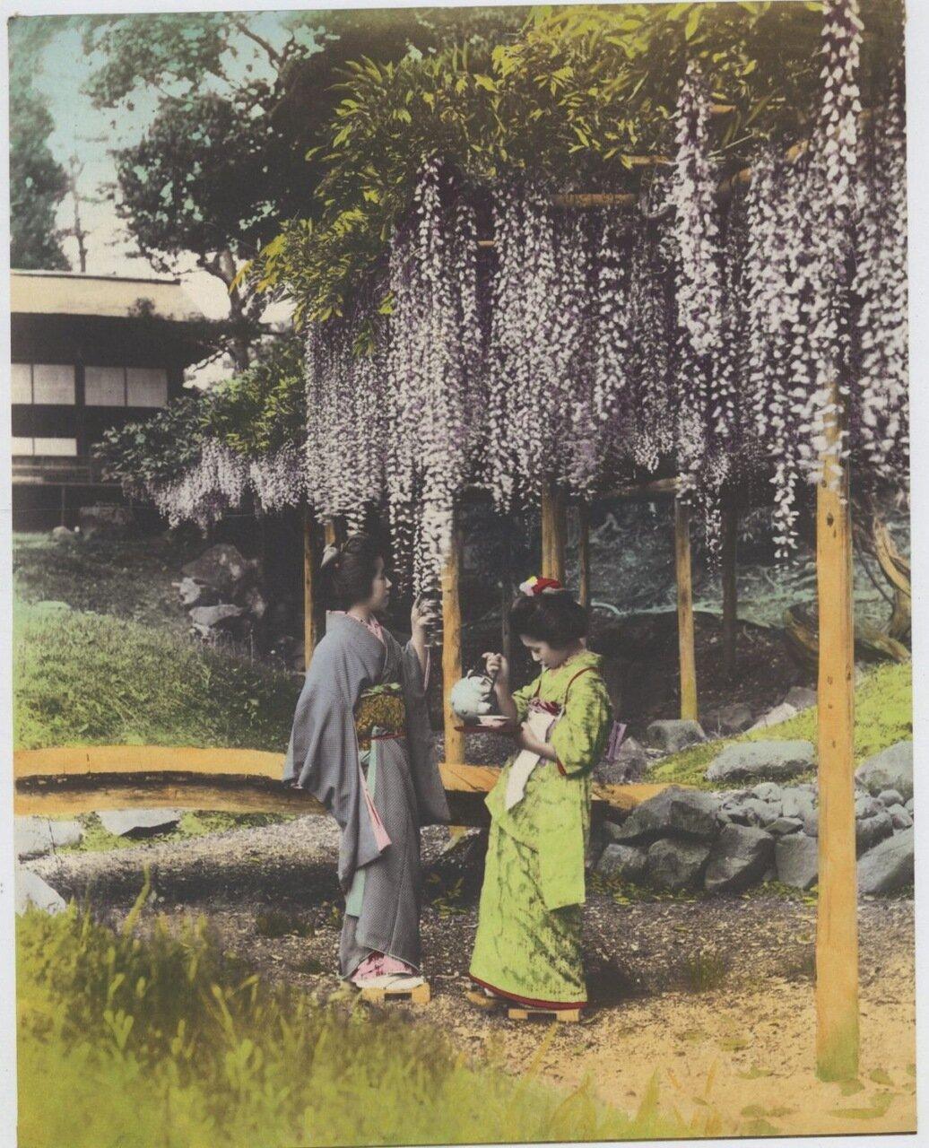 Сад глициний