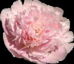 Vintage_Roses_Lilas_el (45).png