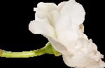 Scrap set Vintage roses