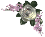 цветы (92).png