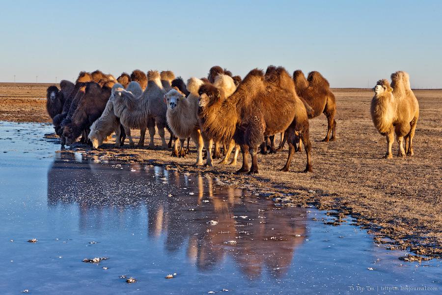 1. Пустыни юго-западного Казахстана.