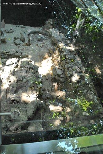 одесса захоронение древних людей