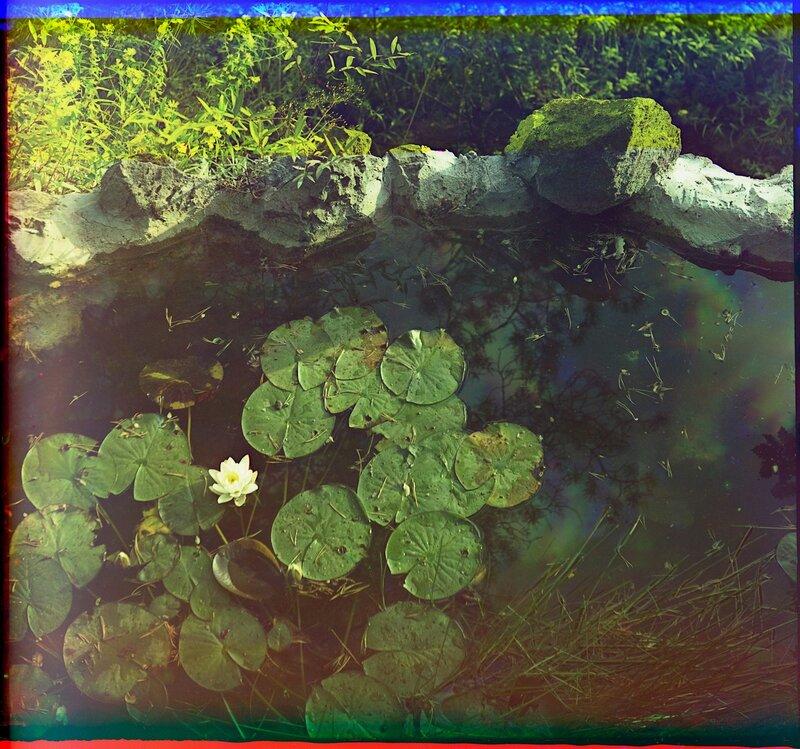 Водяные лилии 21584u.JPG