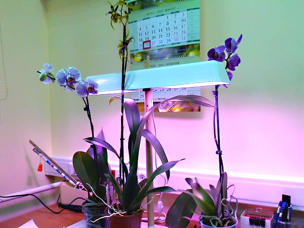 Орхидейки