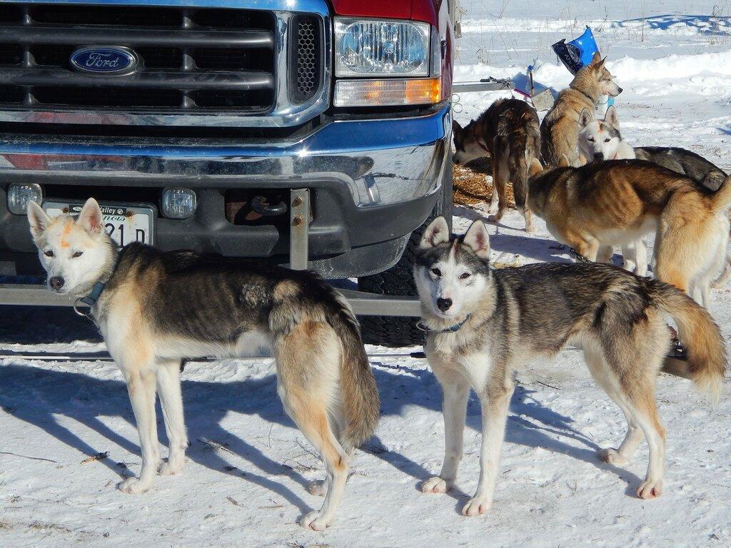 Гонки на собачьих упряжках.