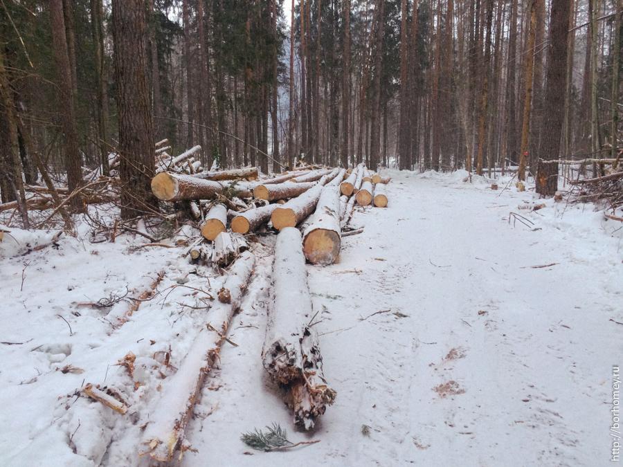 лес упал