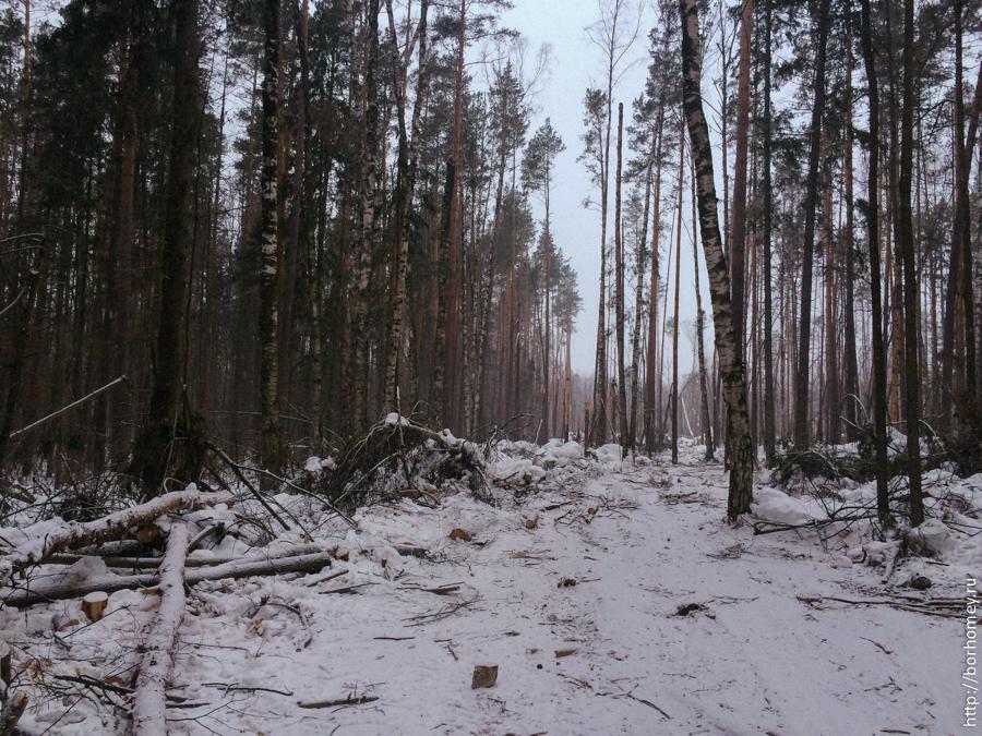 поляна с поваленными деревьями