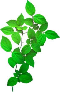 ветки с листьями