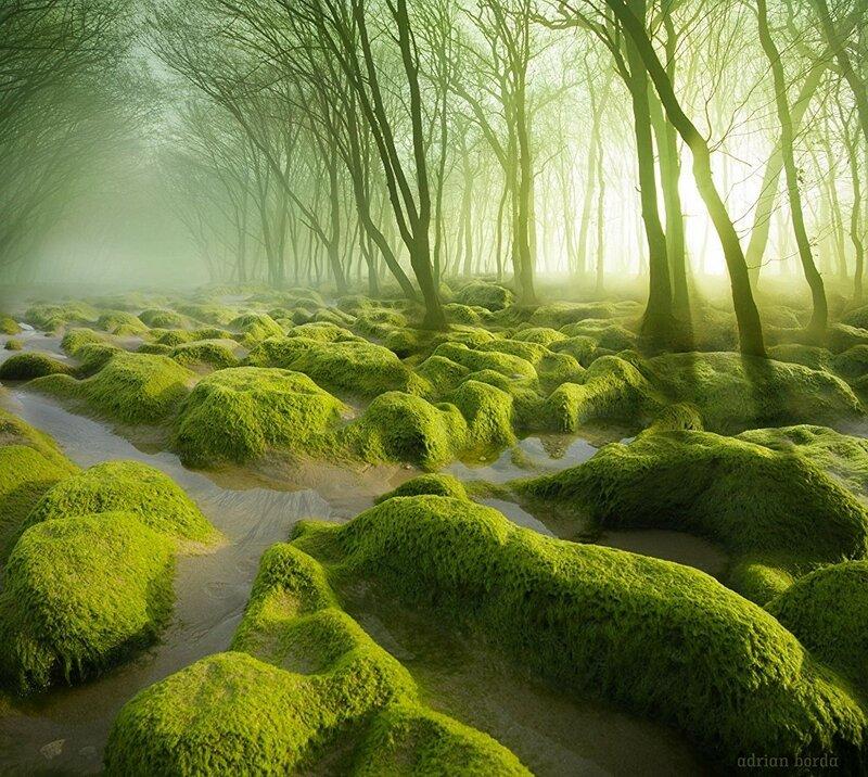 Болотистые леса, Румыния