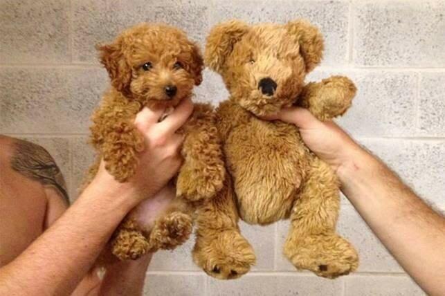 Невероятные двойники собак среди животных, людей, игрушек, персонажей мультиков