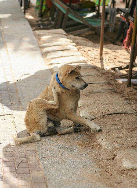 Местный пёс на пляже