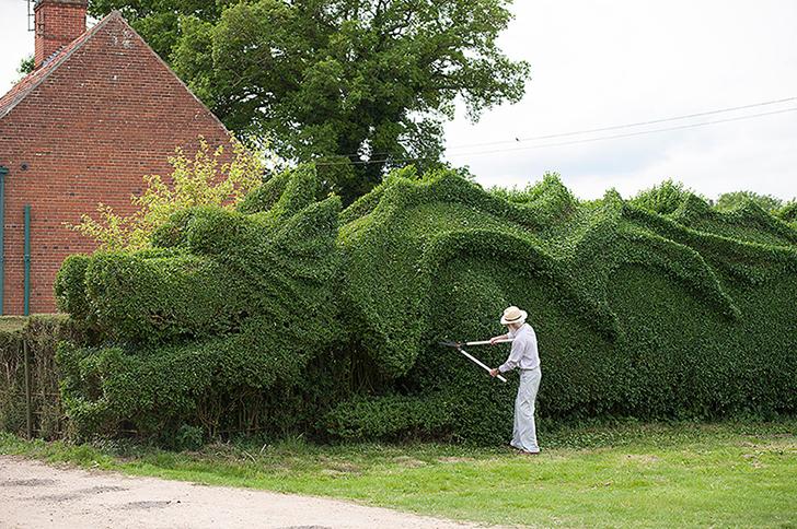 Джон Бурерожденный: англичанин вырастил дракона на своей лужайке (6 фото)