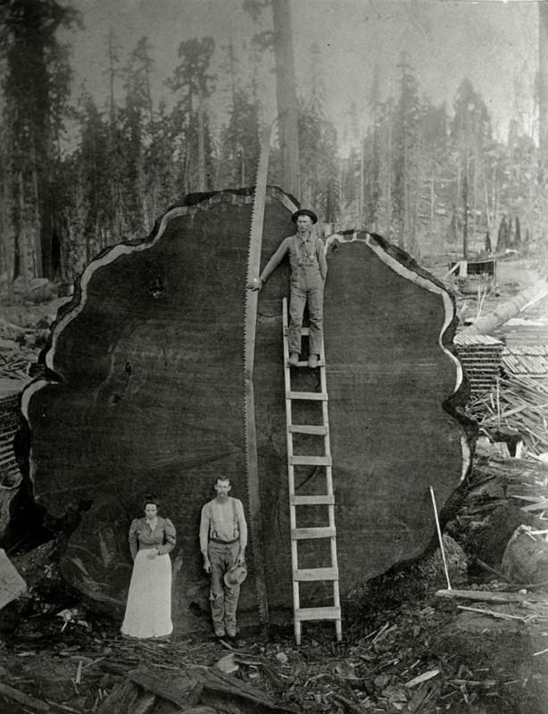 Лесорубы на фоне срубленной именной секвойи «Марк Твен», Калифорния, 1892 год.