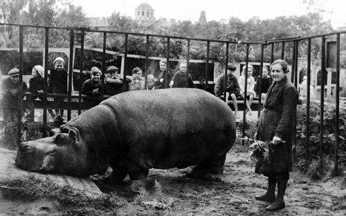 Война и бегемоты